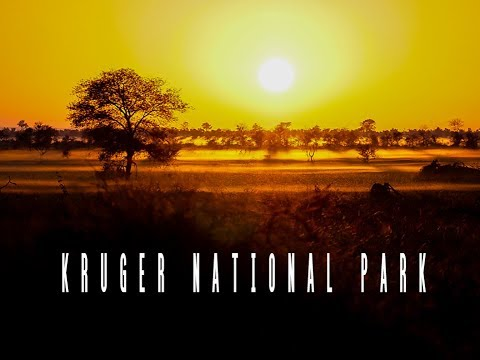 KRUGER NATIONAL PARK | South Africa Safari Travel Vlog (HD)