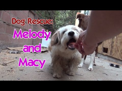 Dog rescue: Melody and Macy  Please share so we can find them a home.  Thanks!
