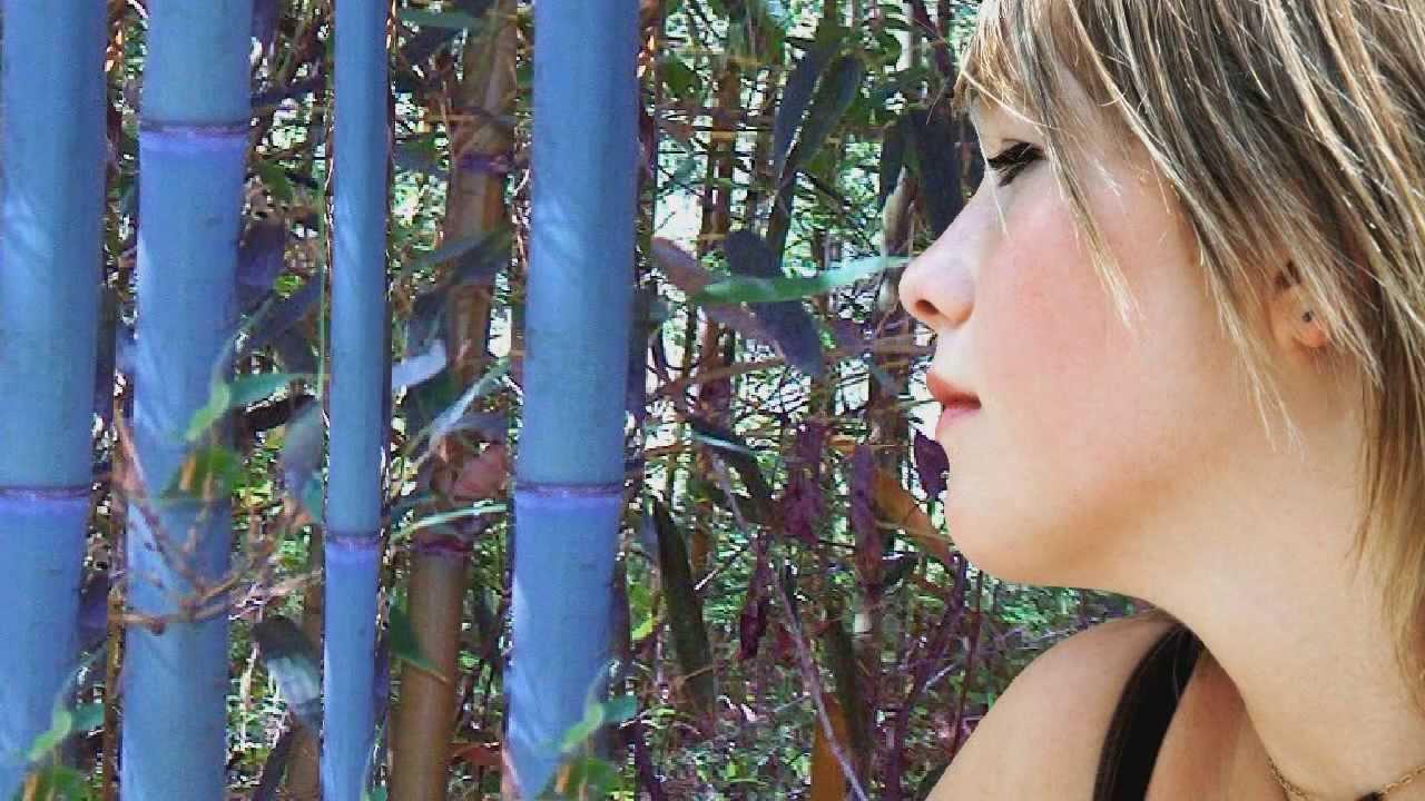 blue henon bamboo plants fast