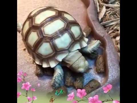 Mazuri Tortoise Diet LS Food