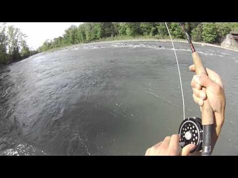 Fly fishing cattaraugus creek for bass youtube for Cattaraugus creek fishing report