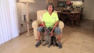 How To Teach A Dog To Fetch Slippers : Dog Training & Care