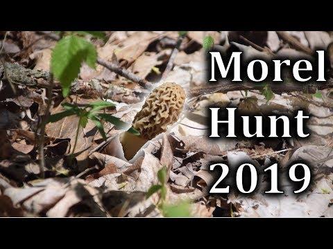 Morel Mushroom Hunt 2019 - Foraging Wild Mushrooms