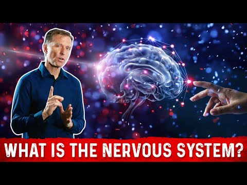What is the Nervous System?