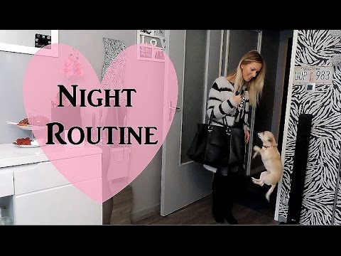 Night routine : Chihuahua qui vole? - YouTube