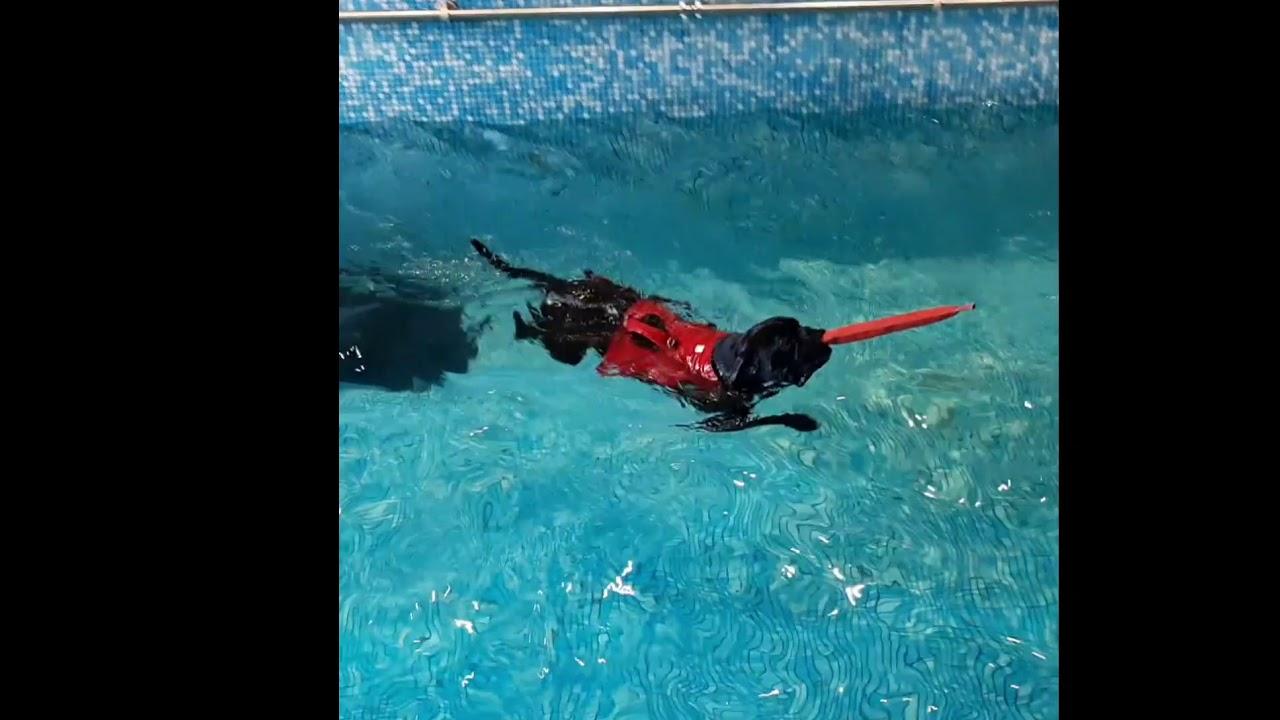 Dog Pool ! Pongo profite !