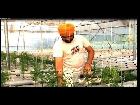 Advanced Hydroponic System in India | Crops from Drops | Young farmer of Punjab