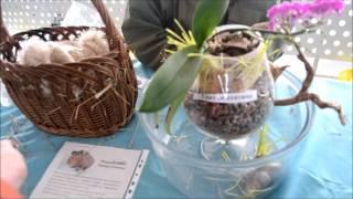 Выставка грызунов Весенние Следочки