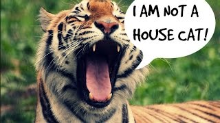 top 10 wild animal pets dangerous wild animals you can own as pets