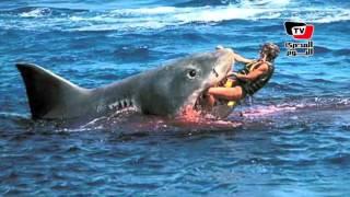 خبيرة بيولوجية: «القرش» منتشر بالبحر الأحمر.. وصيده «ممنوع»