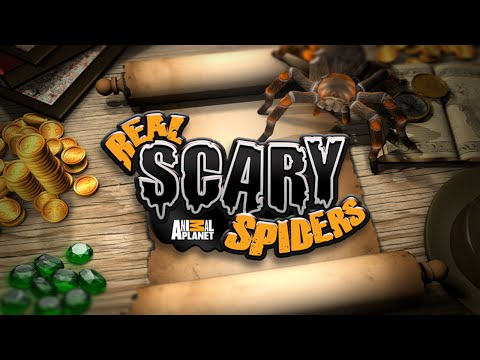 Real Scary Spiders- By Discovery Communications - Casual - Google Play(Super HD Quality)