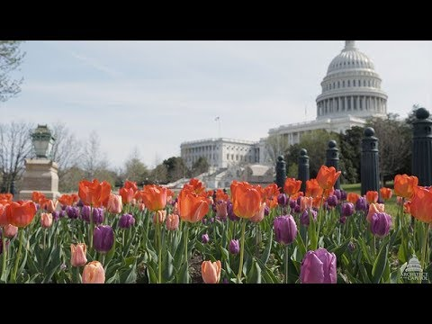 Spring at the United States Capitol