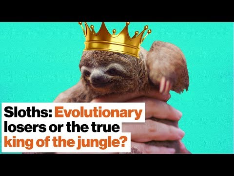 Sloths: Evolutionary losers or the true king of the jungle?   Lucy Cooke