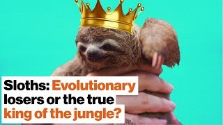 Sloths: Evolutionary losers or the true king of the jungle? | Lucy Cooke