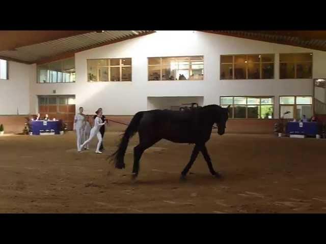 1. Sichtung Kalkar Team Equus 1 Kür