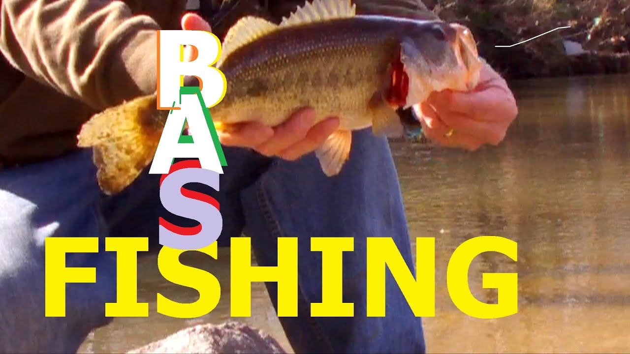 Bass fishing secrets pdf creator