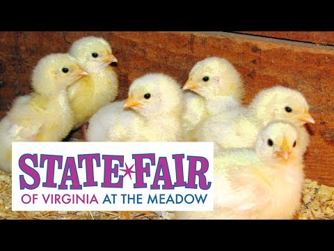 VIRGINIA STATE FAIR 2017 😃 NEW SIGHTS FOR 2017! Doswell, VA Meadow Park 👈