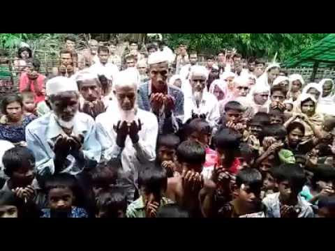 the is rohingya news(1)