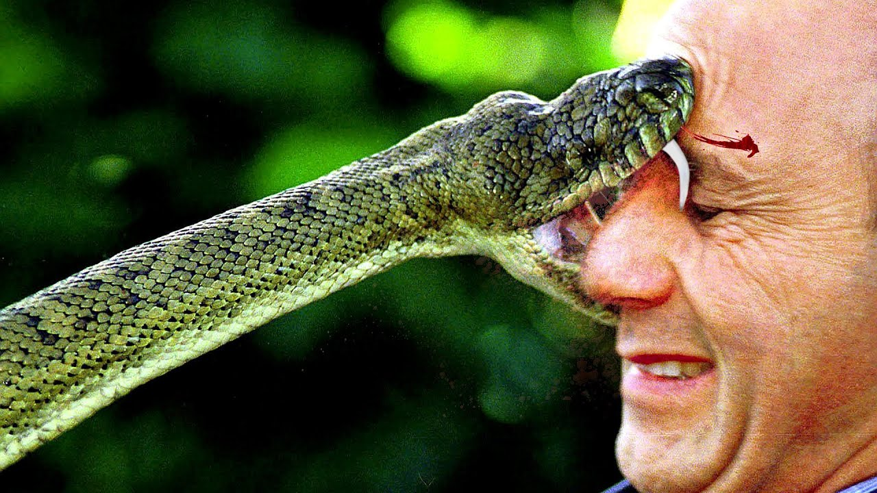 The most poisonous creature in the world 95