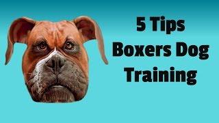 Boxer Dog Training 101: 5 Basic Tips To Train Your Boxer