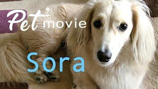 ペットムービー Sora Pet'movie PV