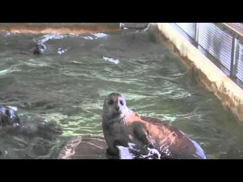Seaside Aquarium Harbor Seals