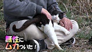 【地域猫】超ムカツク猫を病院送りにしてやった!【魚くれくれ野良猫】 thumbnail