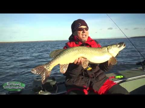 Trolling For Fall Northern Pike On Tobin Lake On Fishing Saskatchewan.