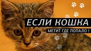 Как отучить гадить по углам кошку и Как приучить котенка к лотку