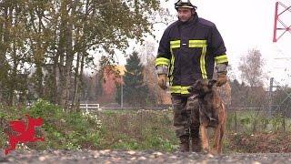 Un centre de formation pour les chiens sapeurs-pompiers