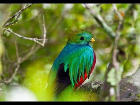 YPC MDV - Green Bird (OST Cowboy Bebop