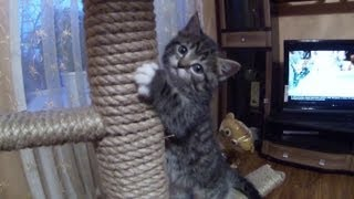 смешные котята, самодельный столб для котят- GoPro 3 Black