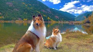 Dogs enjoying fall season
