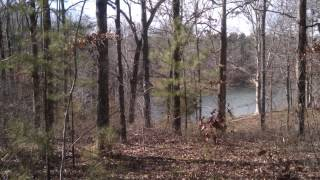 Land for Sale/Lake View Lot - Woodrun Subdivision, Middleton, Tennessee