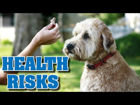 Treat training dogs is a health risk.
