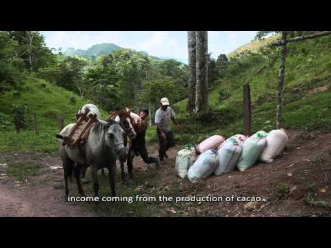 Producing fine cocoa in Nicaragua