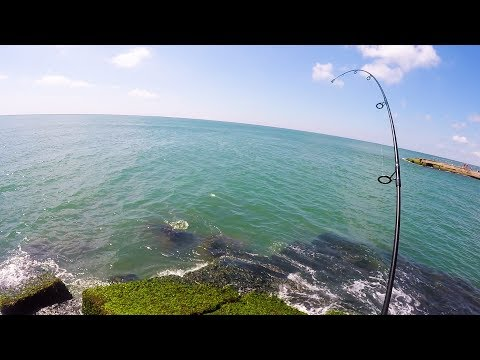 The Heaviest CREATURE I Have Hook While Fishing - JETTY FISHING