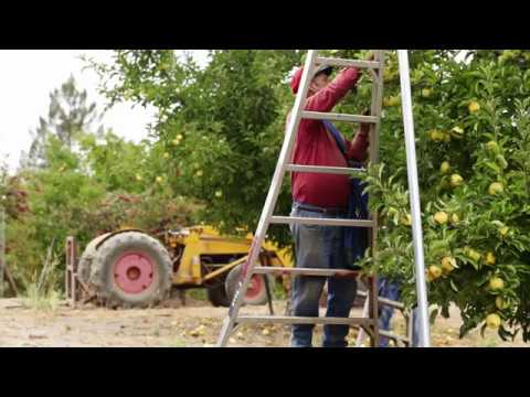 Apple Growers from Sonoma County, CA | Lee Walker Jr. from Walker Apples