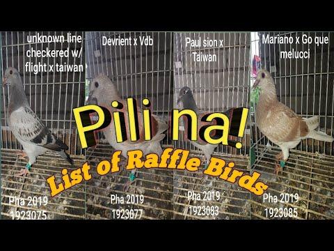 Pigeon Race Raffle Birds....