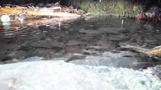江ノ島にはかつて 十数カ所の井戸があったそうだ。 江の島は、地質構造...