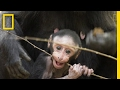 Get to Know These Cute Baby Monkeys | National Geographic