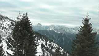 Wildlife blog: Chamois of the alps - Gämsen part 1