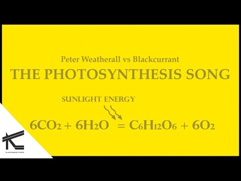 The Photosynthesis Song - Peter Weatherall vs Blackcurrant