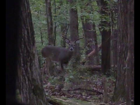 Cade's 2020 Arkansas Archery Hunt