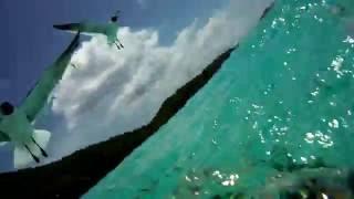 trunk bay fish attack