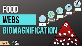 What is Biomagnification in hindi/Urdu (Educational Animation)