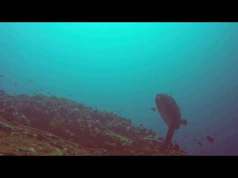 Eastern Pacific Dive 2016 3
