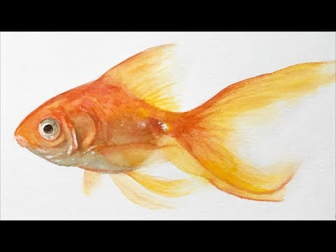 Animals #19 - Watercolor Painting Lesson Of A Goldfish