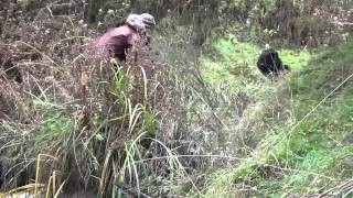 pig hunting nz 3 good boars