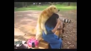 СЕКС МАНЬЯК СОБАКА СПАРИВАЕТСЯ С ЖЕНЩИНОЙ ОЧЕНЬ СМЕШНО! Dog mates with woman